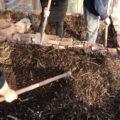 Producción de compost y plantas medicinales, El Maitén
